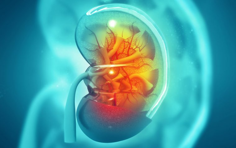 COL4A5 Protein Measurements in Alport Patients' Kidneys May Aid in Prognosis, Researchers Say